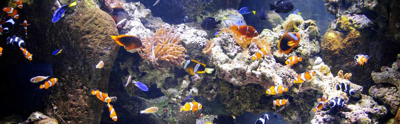 visitez aquarium biarritz pays basque